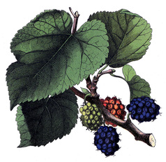east_feast_berries