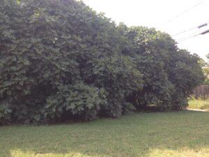 fbff_post-plant_blackshearbridge