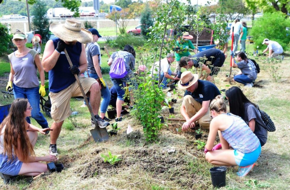 Volunteers help plant new perennials to create guilds around Festival Beach's fruit trees