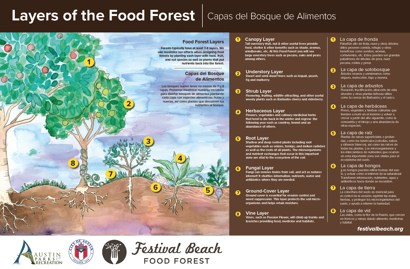 Layers of the Food Forest